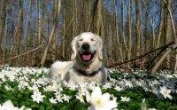 Собака и весна