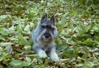 Выставка собак Беларусь  2014